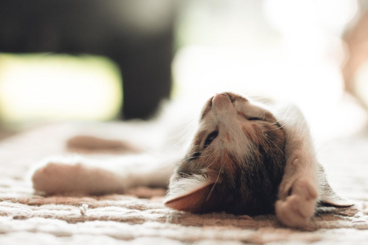 低血圧だから寝起きが悪いのはウソ?原因は自律神経の乱れだった?
