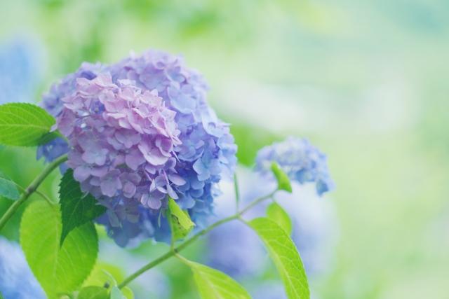 卯の花腐し・卯の花くたしの意味は?梅雨の言葉はこんなにたくさん!