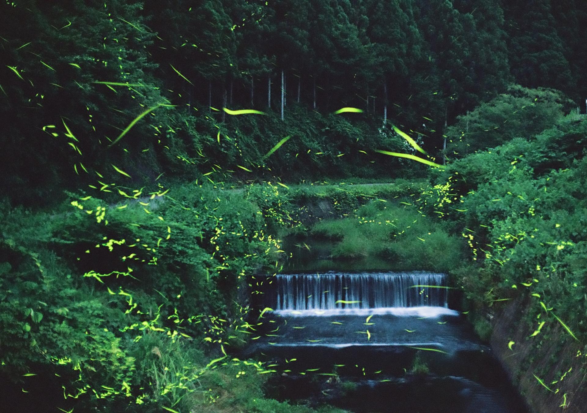 岡山のホタル名所~矢掛町宇内ホタル公園と周辺の川に蛍を見に行こう